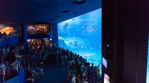 沖縄を訪れたら絶対に外せない観光スポット 沖縄美ら海水族館 Okinawa Churaumi Aquarium