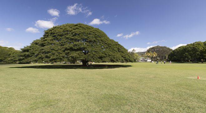 ハワイ旅行記2017その5 モアナルアガーデン編 Hawaii Trip 2017 Moanalua Garden