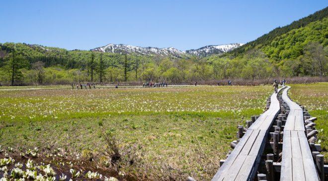 尾瀬 鳩待峠から尾瀬ヶ原へのハイキングコースは美しい水芭蕉と風景が魅力 Oze Hatomachi Pass to Ozegahara