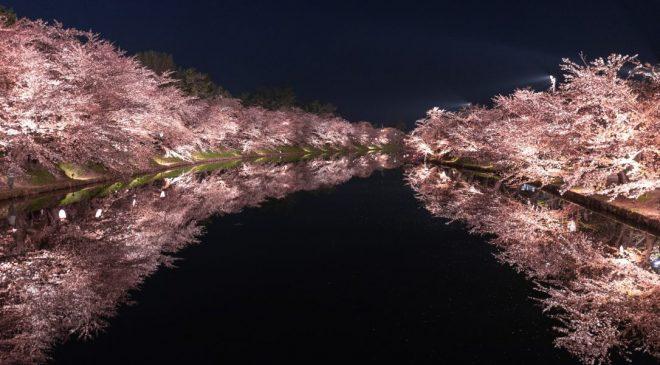 動画で国内旅行 弘前城の夜桜 春陽橋 Cherry Blossom at Shunyo Bridge, Hirosaki Castle