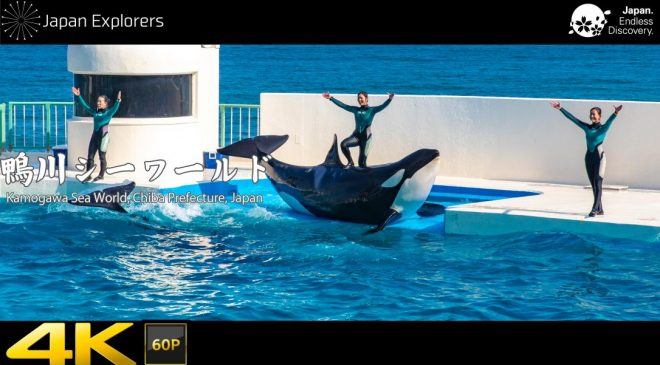 動画で国内旅行 千葉県 鴨川シーワールド Kamogawa SeaWorld, Chiba, Japan
