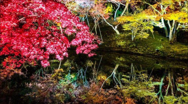 動画で国内旅行 京都府 高台寺の絶景紅葉ライトアップ Autumn Leaves at Kodaiji Kyoto (Night)