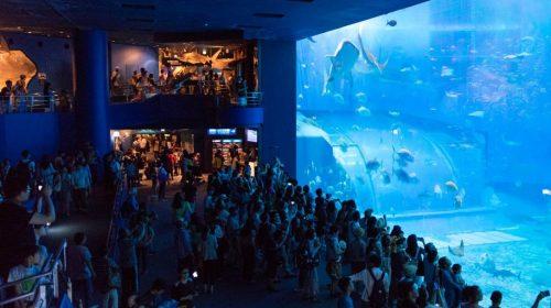 動画で国内旅行 沖縄県 美ら海水族館・黒潮の海 Kuroshio Sea at Okinawa Churaumi Aquarium, Okinawa, Japan