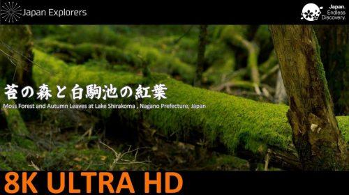 動画で国内旅行 長野県 苔の森と白駒池の紅葉 Moss Forest and Autumn Leaves at Lake Shirakoma, Nagano