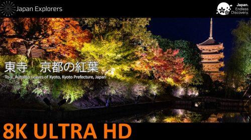 動画で国内旅行 京都府 東寺・ライトアップ紅葉 To-ji, Kyoto