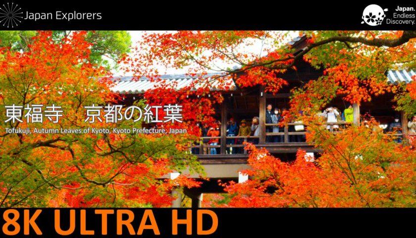 動画で国内旅行 京都府 東福寺の紅葉 Autumn Leaves of Tofukuji, Kyoto