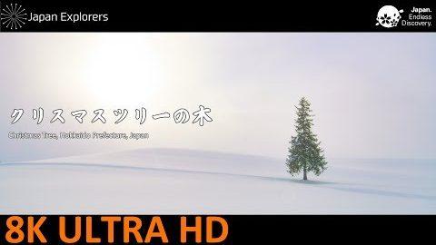動画で国内旅行 北海道 クリスマスツリーの木 Christmas Tree in Hokkaido, Hokkaido