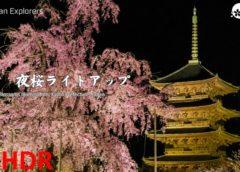 動画で国内旅行 京都 東寺夜桜ライトアップ, Toji Cherry Blossoms Illumination, Kyoto